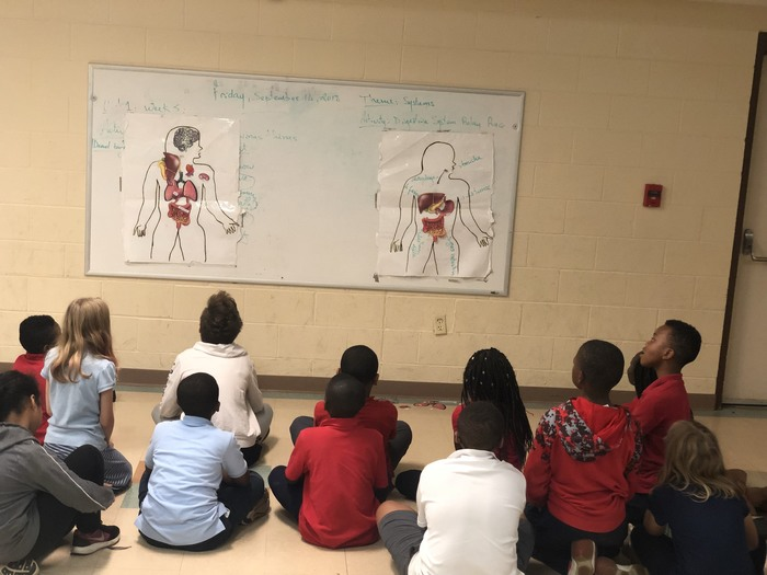 5th grade are learning about systems... Digestive system and respiratory system in P.E.